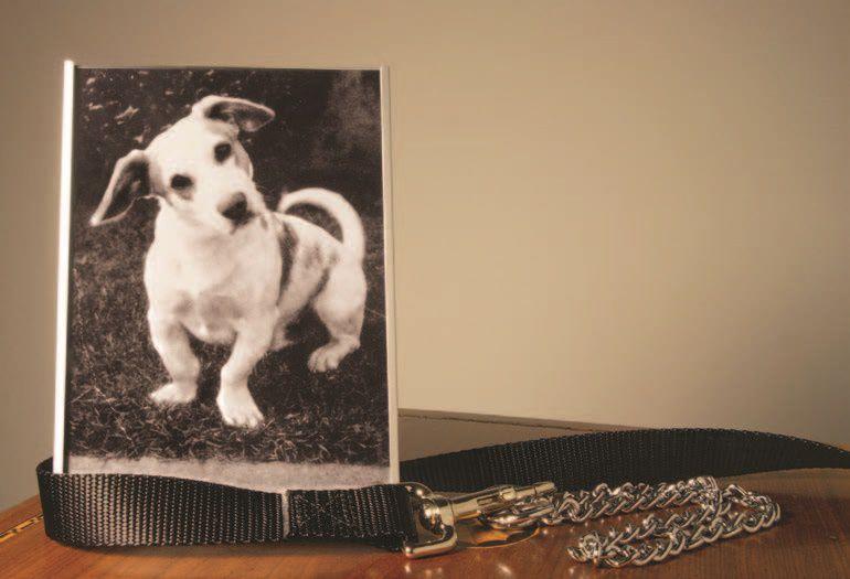 Survey Says: Pet Death Harder Than Human Loss