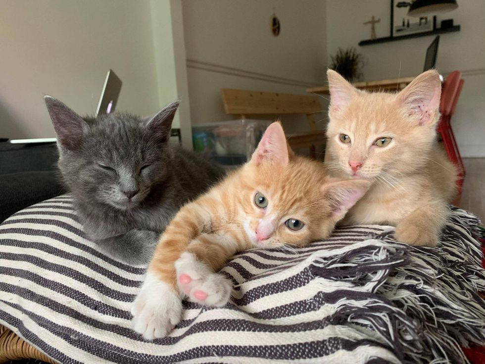 Trio Kittens Spotted Near Shed Help One Another Through Thick and Thin Throughout Their Journey
