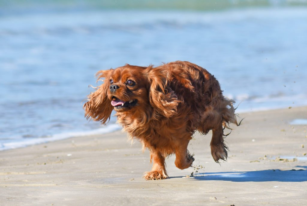 Ways to Pup Up Your Pet's Exercise Routine