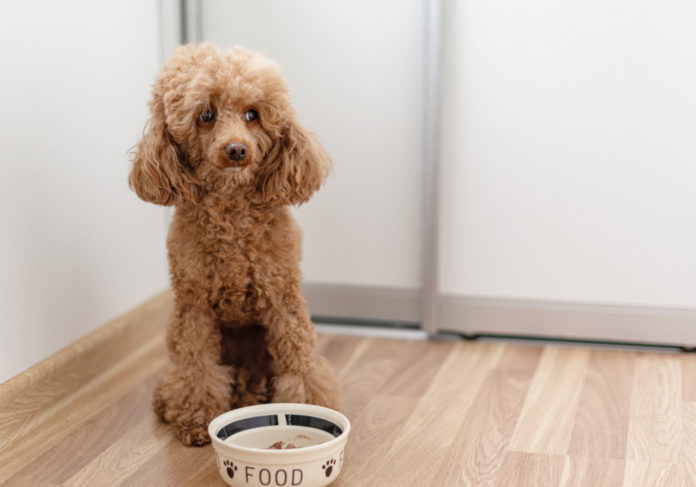 10 reasons why dogs and cats lose their appetite