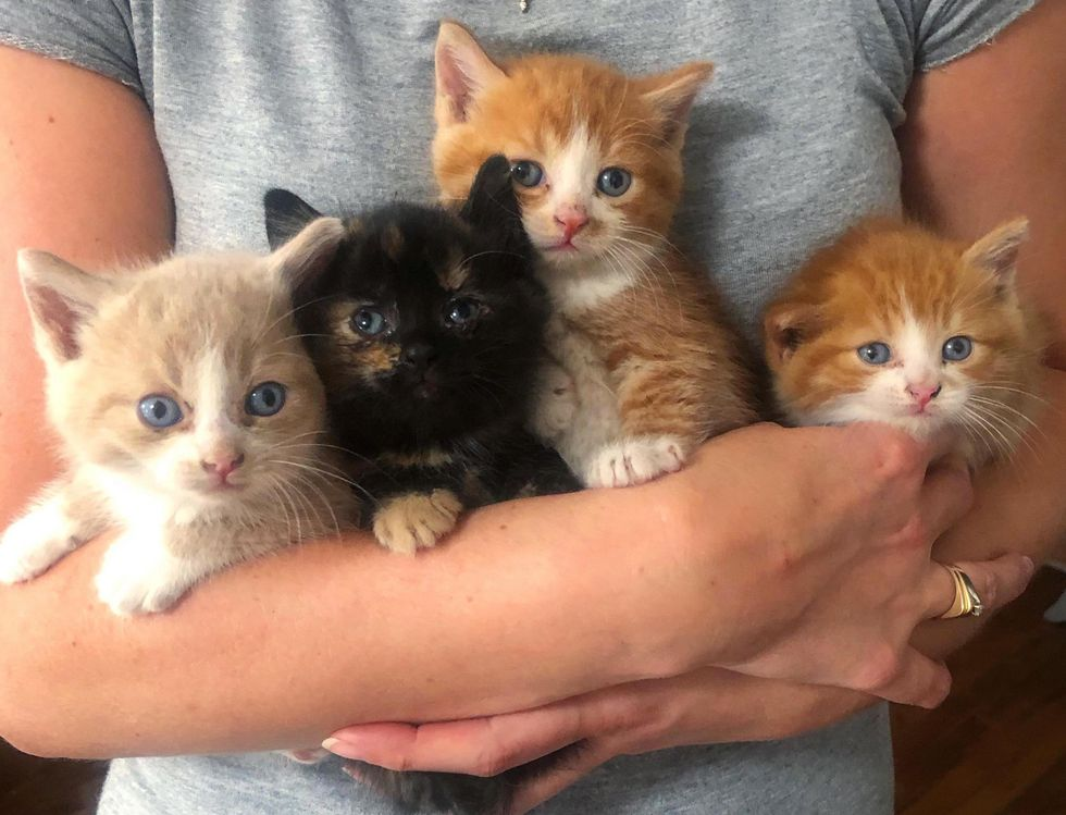 4 Kittens Find Help Before It's Too Late and Won't Leave Each Other's Side the Whole Time