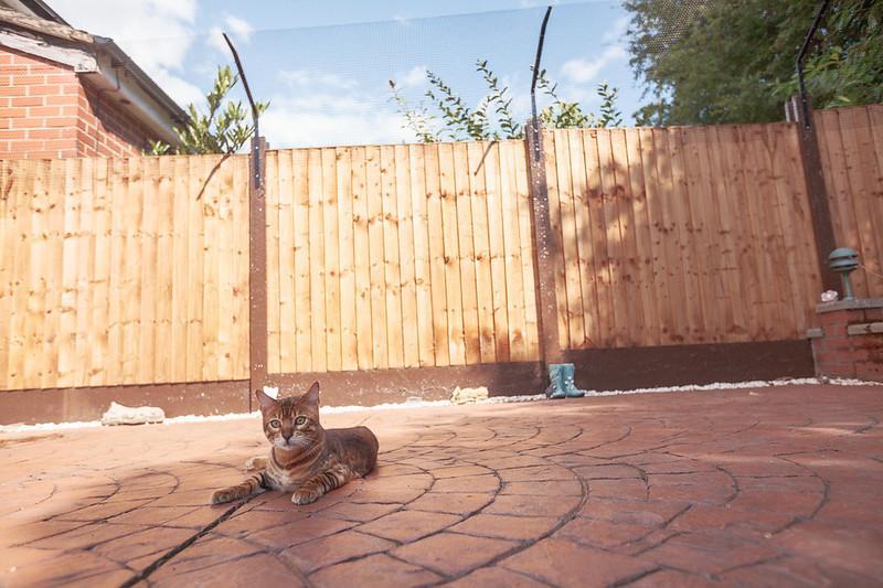 Cat Fencing For Bengals