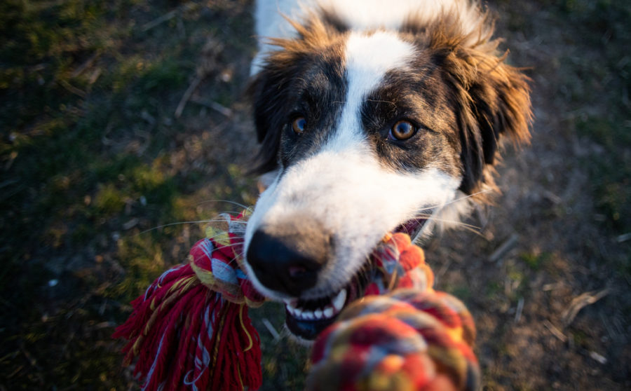 Consistent training plus calming supplements may help overcome behavioral problems in dogs and cats