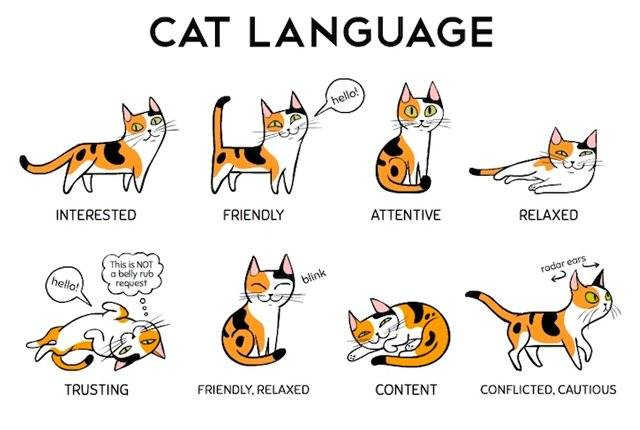 Experts Reveal how to Have a 'Conversation' With Your Cat