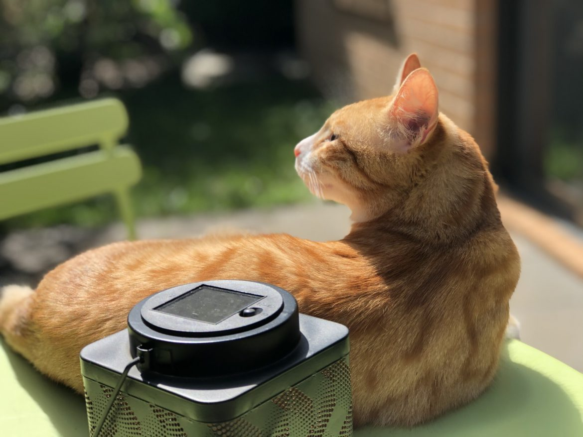 Guest Cat Star: Marty's Story