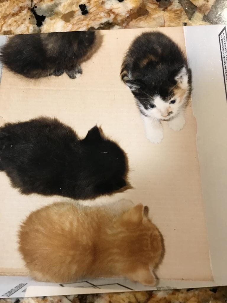 Guest Star Cat: Earthquake Kittens