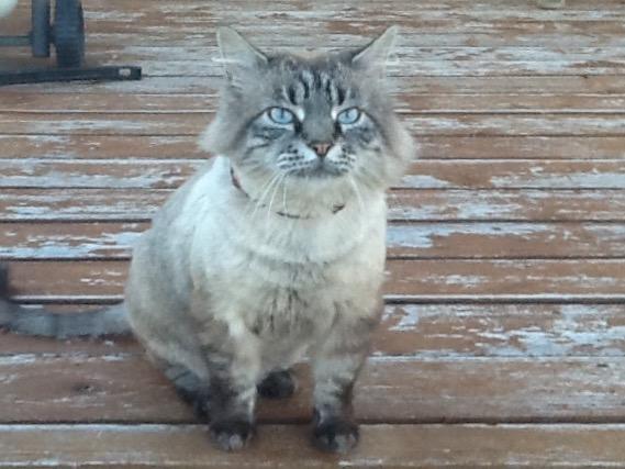 Guest Star Cat: Mokie