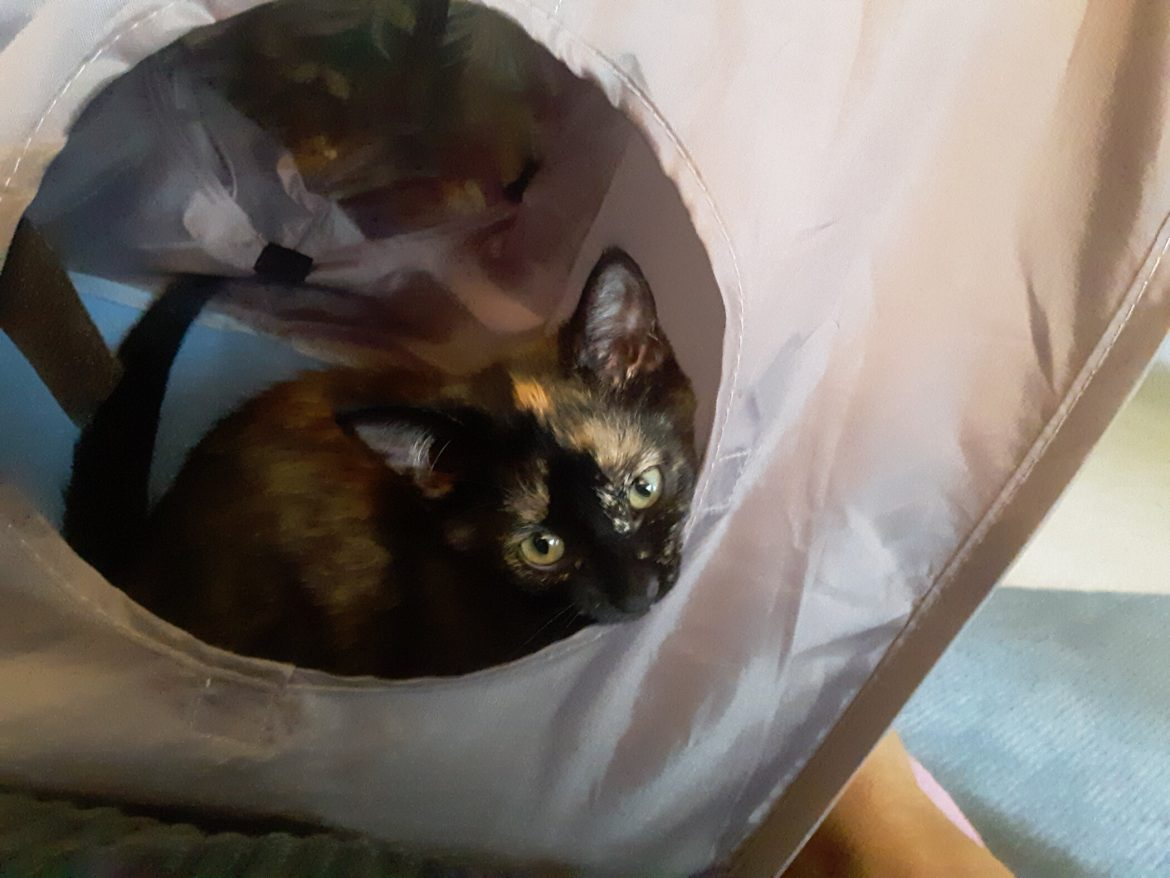 Guest Star: The Rescued Cat That Rescued her Human