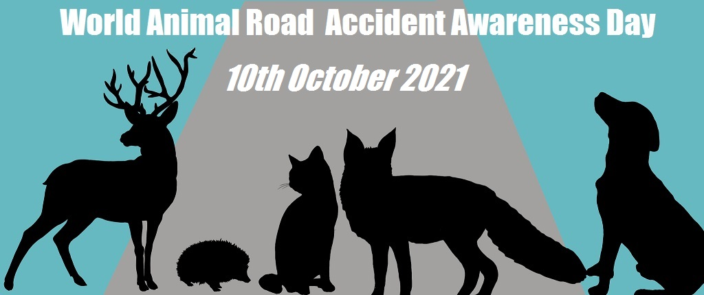 Help Stop Animals Being Driven to Their Graves! – World Animal Road Accident Awareness Day