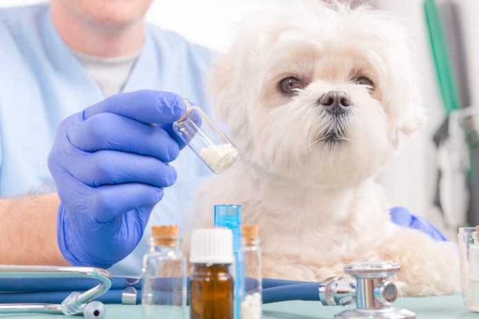 Homeopathy for your animal's dental issues