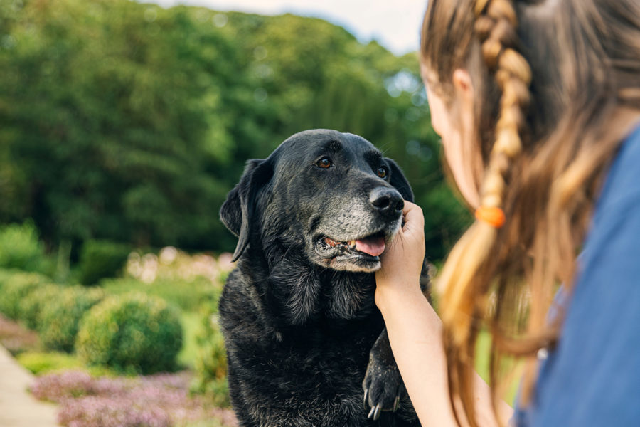 How to improve your aging dog's quality of life