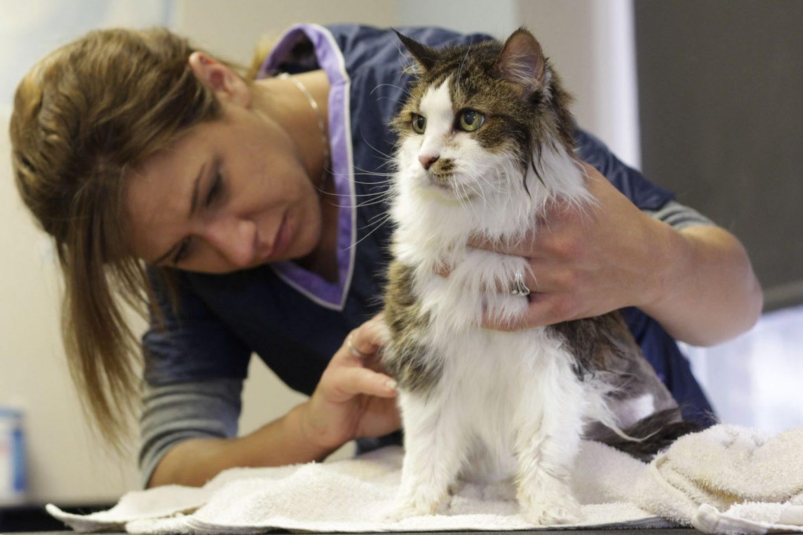 How To Remove Pet Odours From Your Home In Readiness For A New Cat