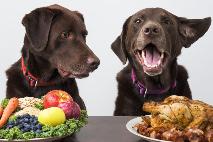 How to safely feed your dog a plant-based diet