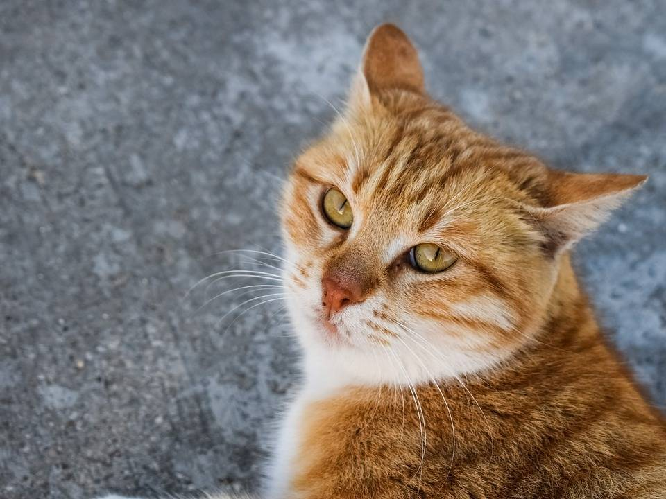 iCatCare Courses: Bringing Cat Friendly Solutions for Unowned Cats to Life
