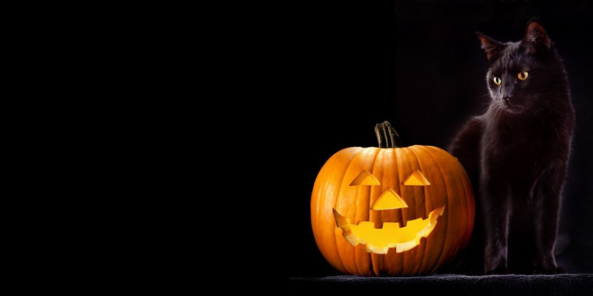 Keeping Your Cat Safe During Halloween and Bonfire Night Celebrations