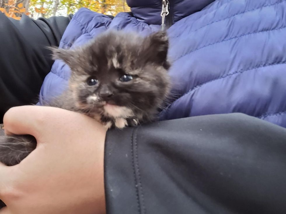 Kitten Found in the Woods by Hikers Makes it to Comfortable Nest After Quite the Journey