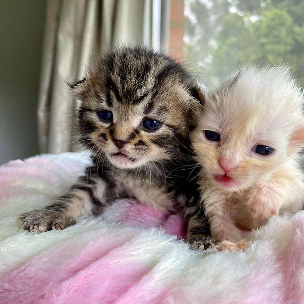 Kitten Looks Out for His Only Brother Everywhere They Go After Being Found Just in Time