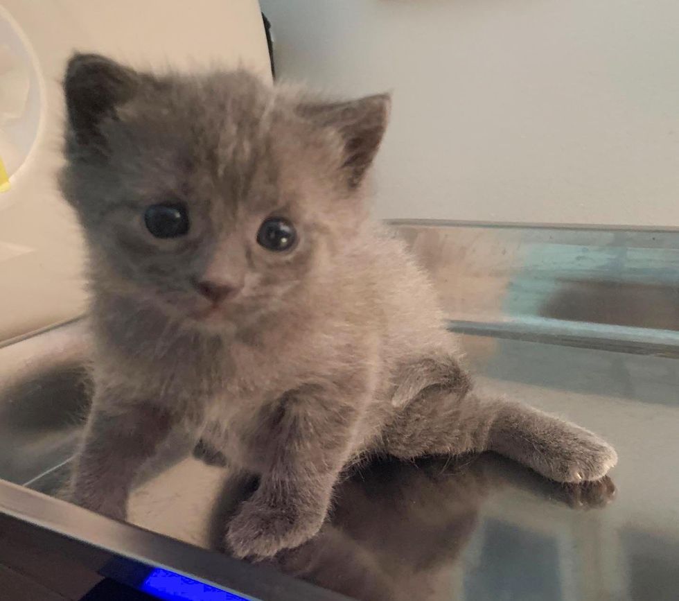 Kitten with Frog-like Legs Makes Great Progress in Weeks and Strives to Live Full Life