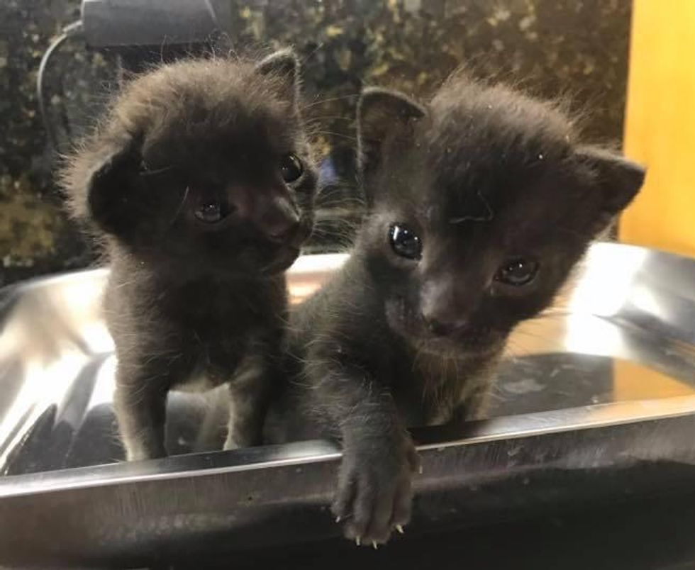 Kittens Turn a Corner as Unbreakable Duo after Being Found Outside a House, and Grow into Gorgeous Cats