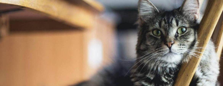 Morris Animal Foundation and TEDxMileHigh – Spreading Big Ideas Together