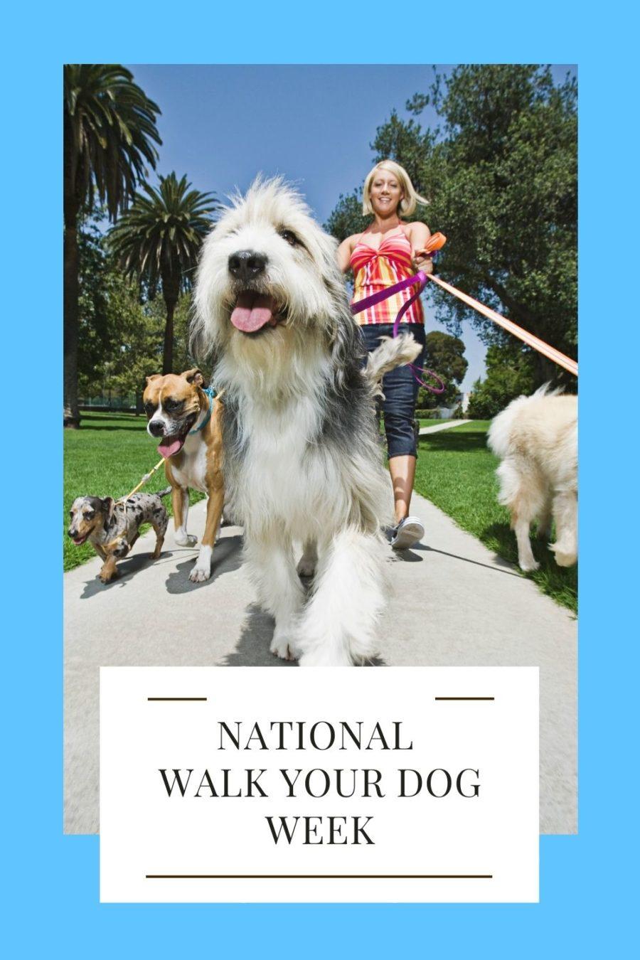 National Walk Your Dog Week