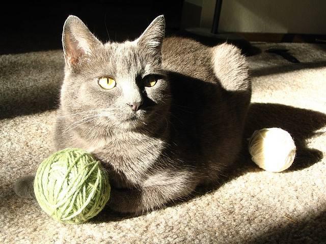 Purrsday Poetry: The Cat Whisperer (Case of the Finicky Feline)