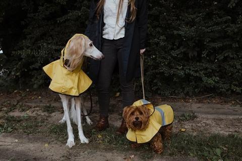 Raincoats For Dogs on Rainy Walks