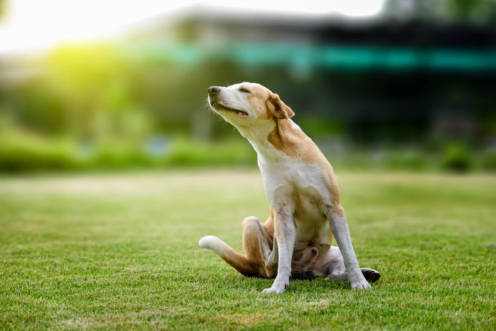 Tackling your dog or cat's skin problems with nutrition and supplements