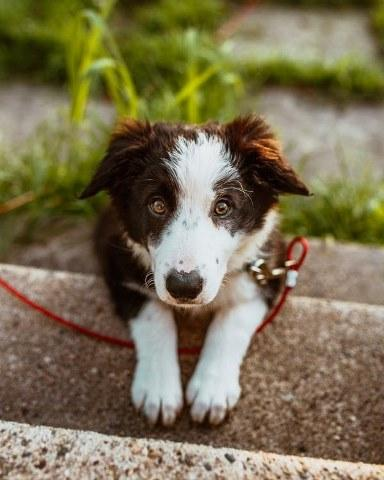 What Is The Best Way To Get Your Dog To Play?