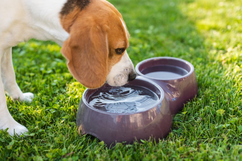 Why You Should Watch Your Dog's Water Intake Habits