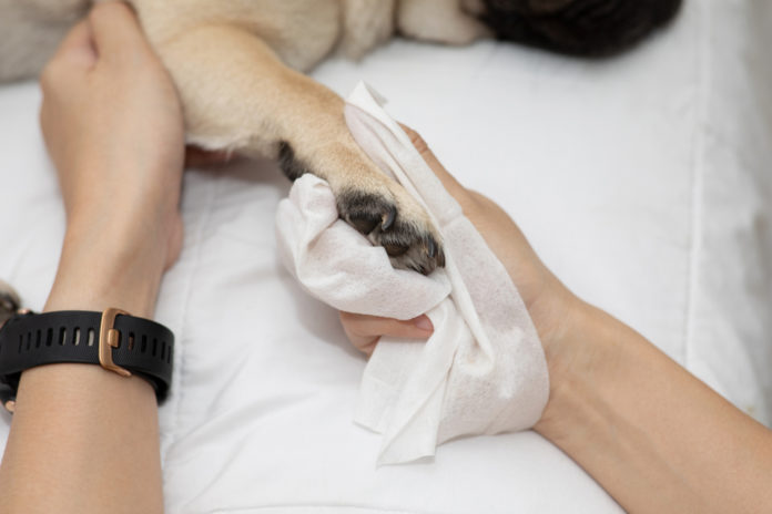 Year-round paw care for dogs